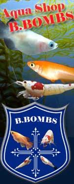 めだか、ビーシュリンプ 通販専門店 B-BOMBS